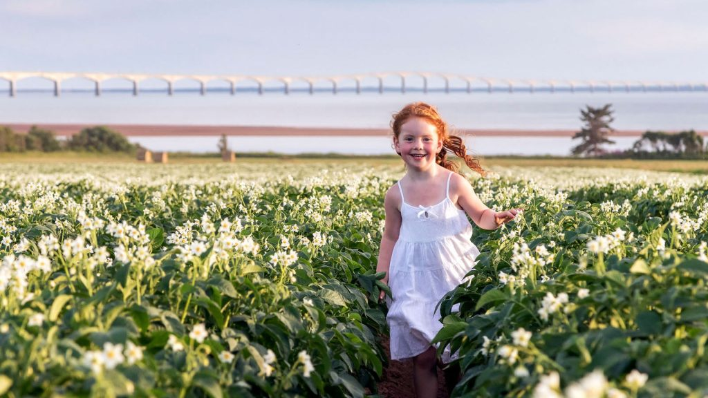 PEI little red headed girl running in teh field with Confederation Bridge in background